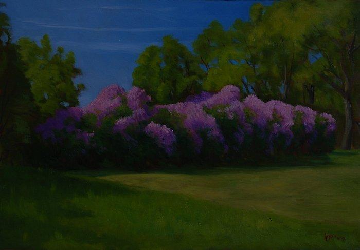 Lilacs on Lindbergh Drive